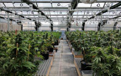 La crisis económica causada por el COVID-19 impulsa al Líbano a regular el cannabis medicinal