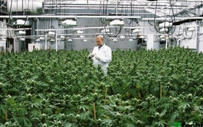 Cómo será la nueva reglamentación del cannabis de uso medicinal en la Argentina