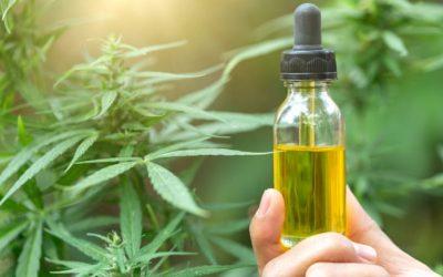 Prometen fabricar aceite de cannabis medicinal en Argentina este año