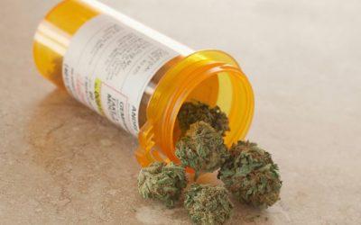 Conicet presenta un sistema para evaluar la calidad del cannabis medicinal argentino