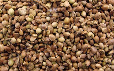 Ministerio de Justicia de Colombia prepara nueva autorización para exportación de semillas de cannabis